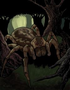 full_spider